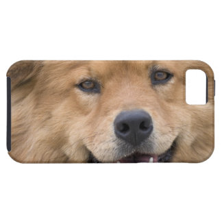 Close up of chow mix dog outdoors. iPhone 5 cover