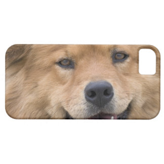 Close up of chow mix dog outdoors. iPhone 5 covers