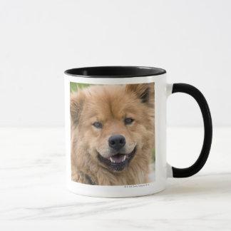 Close up of chow mix dog outdoors. mug