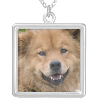 Close up of chow mix dog outdoors. square pendant necklace