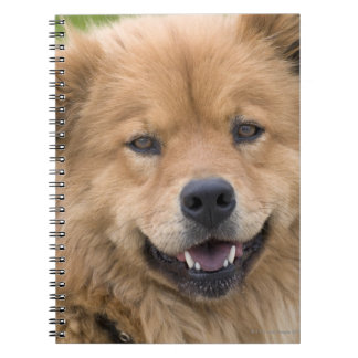 Close up of chow mix dog outdoors. notebook