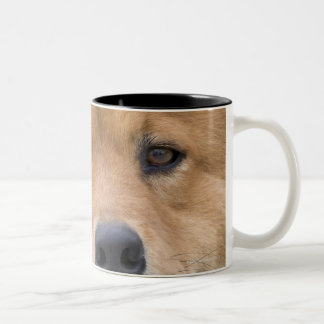 Close up of chow mix dog outdoors. Two-Tone coffee mug