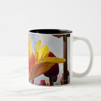 Close Up of Colorful Blooming Tulips In Oregon Two-Tone Coffee Mug