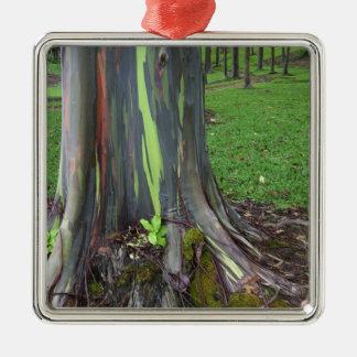 Close-up of colorful eucalyptus tree bark christmas ornament