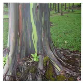 Close-up of colorful eucalyptus tree bark large square tile