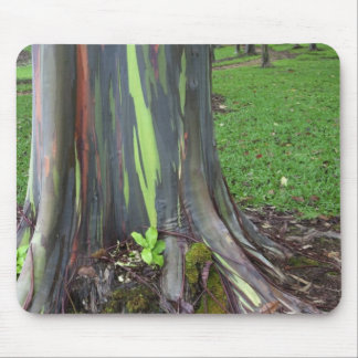 Close-up of colorful eucalyptus tree bark mouse mat