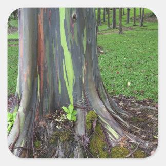 Close-up of colorful eucalyptus tree bark square sticker
