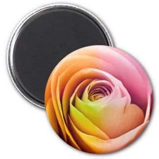 Close up of Colorful Rose Petals Fridge Magnet