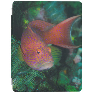 Close-up of Coral Trout iPad Cover