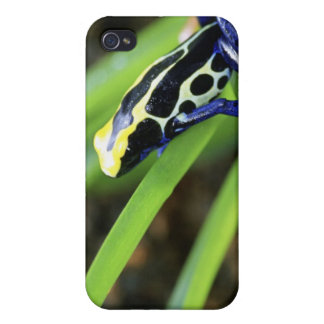 Close-up of Costa Rican Cobalt Dyeing Dart Frog iPhone 4/4S Cover