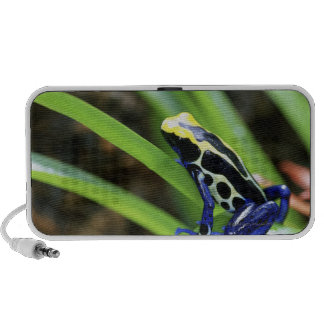Close-up of Costa Rican Cobalt Dyeing Dart Frog Mini Speakers