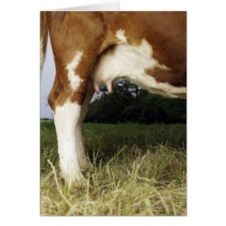 Close up of cow in rural landscape cards