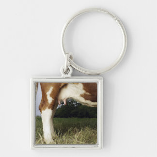 Close up of cow in rural landscape key ring