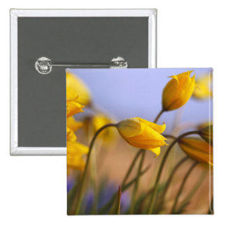 Close-up of daffodils 15 cm square badge