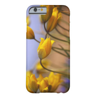 Close-up of daffodils barely there iPhone 6 case