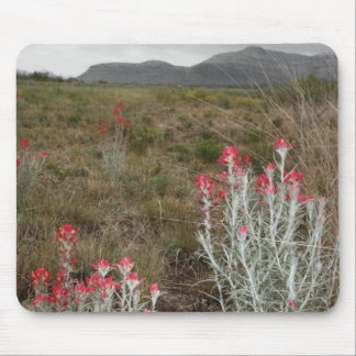 Close-up of Desert Plants, Del Rio, Texas, USA Mouse Mat