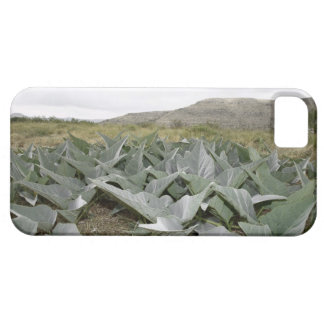 Close-up of Desert Plants, Presidio, Texas, USA Barely There iPhone 5 Case