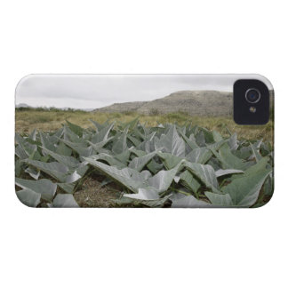 Close-up of Desert Plants, Presidio, Texas, USA Case-Mate iPhone 4 Case