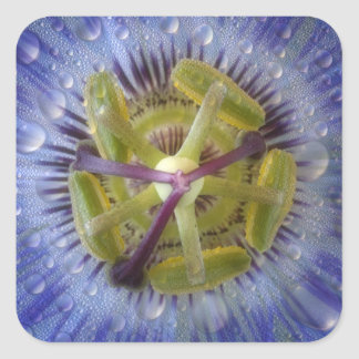 Close-up of dewy passion flower. Credit as: Don Square Sticker