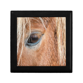 Close-up of eye and head of Icelandic horse Gift Box