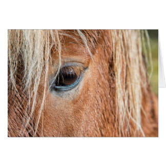 Close-up of eye and head of Icelandic horse Greeting Card