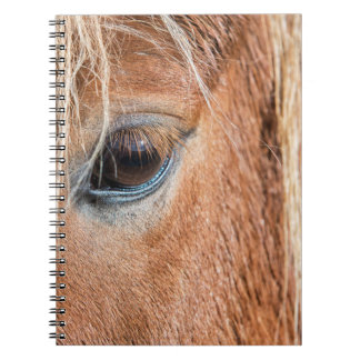 Close-up of eye and head of Icelandic horse Notebooks