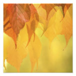 Close-up of Fall Leaves on a Branch Art Photo