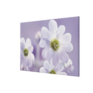 Close-up of flowers canvas print