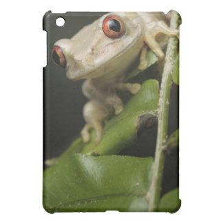 Close up of Forest Tree Frog (Leptopelis iPad Mini Cover