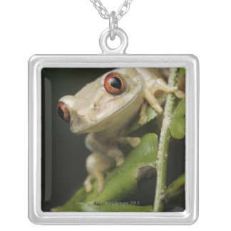 Close up of Forest Tree Frog (Leptopelis Silver Plated Necklace