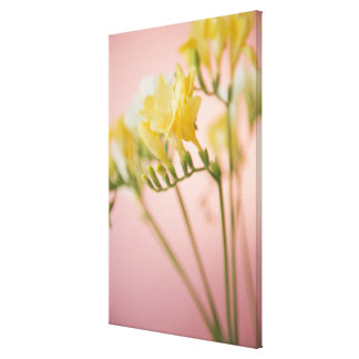Close up of freesia flowers canvas print