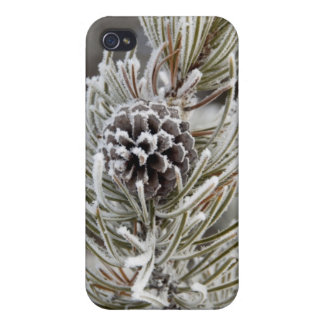Close-up of frozen pine cone, Yellowstone iPhone 4/4S Case