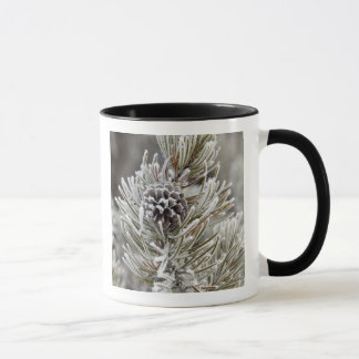 Close-up of frozen pine cone, Yellowstone Mug