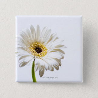 Close up of Gerbera flower head 15 Cm Square Badge