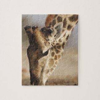 Close up of Giraffe (Giraffa camelopardalis) Jigsaw Puzzle