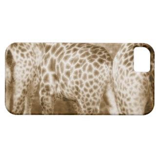 Close-Up of Giraffes Kruger National Park South iPhone 5 Case