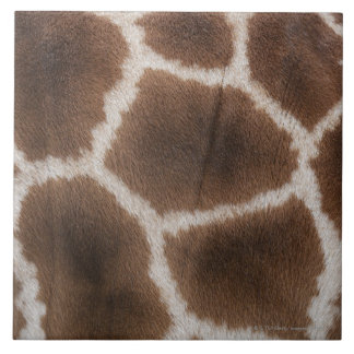 Close up of Giraffes Skin Tile