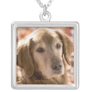 Close up of golden labrador retriever dog silver plated necklace