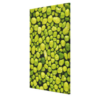 Close-up of green pebbles canvas print