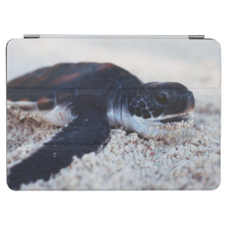 Close-Up of green sea turtle hatchings 1 iPad Air Cover