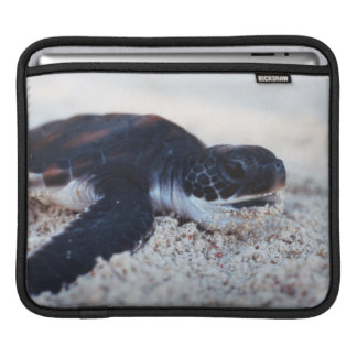 Close-Up of green sea turtle hatchings 1 iPad Sleeve