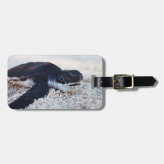 Close-Up of green sea turtle hatchings 1 Luggage Tag
