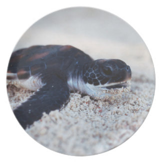Close-Up of green sea turtle hatchings 1 Plate