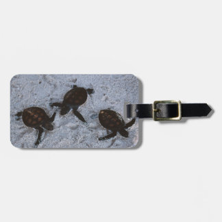 Close-Up of green sea turtle hatchings 2 Bag Tag