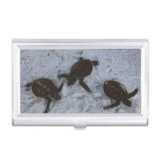Close-Up of green sea turtle hatchings 2 Business Card Holder
