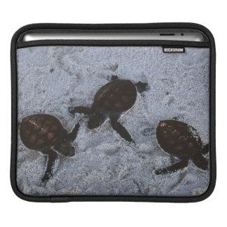 Close-Up of green sea turtle hatchings 2 iPad Sleeve