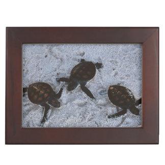 Close-Up of green sea turtle hatchings 2 Keepsake Box