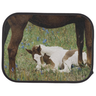 Close-up of Horse and Baby Colt Car Mat