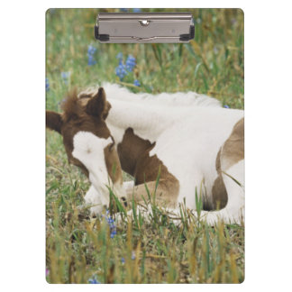 Close-up of Horse and Baby Colt Clipboard