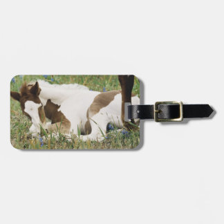 Close-up of Horse and Baby Colt Luggage Tag